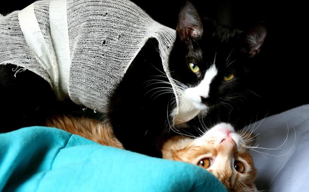 Castração de caes e gatos