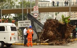 São Paulo - Árvores caídas no Terminal Bandeira - zona central. (Rovena Rosa/Agência Brasil)