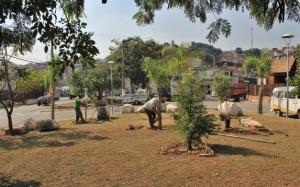 Restauração Vegetal Itapevi