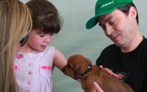Feira de adoção animais