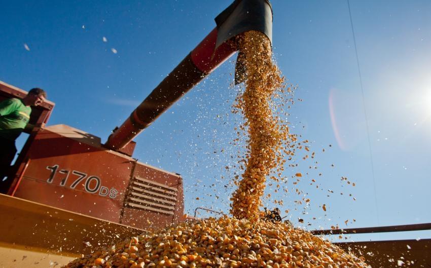 colheita de graos safra